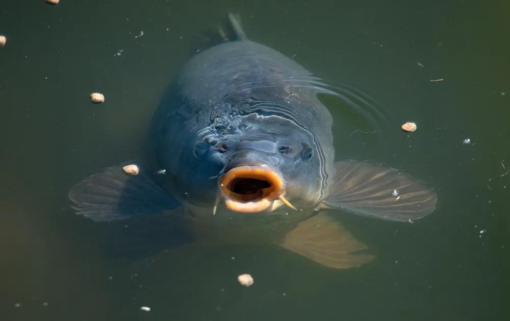 Top 5 Tips for Surface Fishing